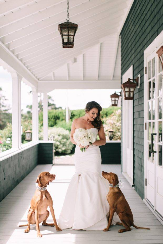 Including Pets In Your Maine Wedding